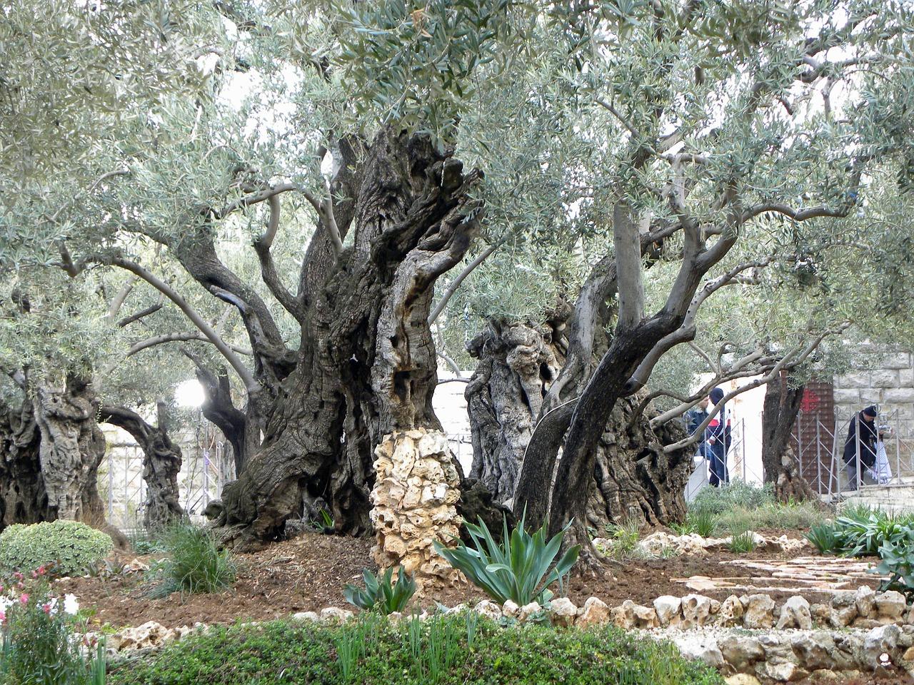 Peter's denial and Gethsemane